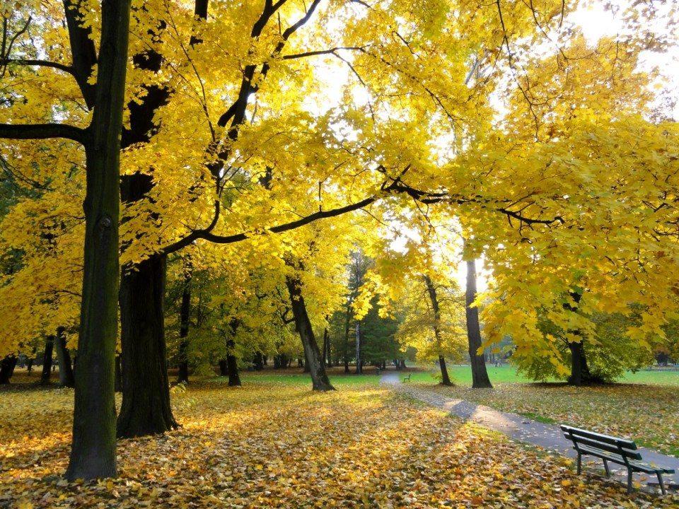 """""""Autumn in Decjusz Park"""" by Jerzy Bereszko - Own work. Licensed under CC BY-SA 3.0 via Wikimedia Commons - https://commons.wikimedia.org/wiki/File:Autumn_in_Decjusz_Park.jpg#/media/File:Autumn_in_Decjusz_Park.jpg"""
